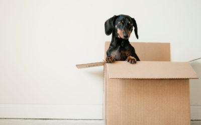 How To Find The Best Mover In London Ontario